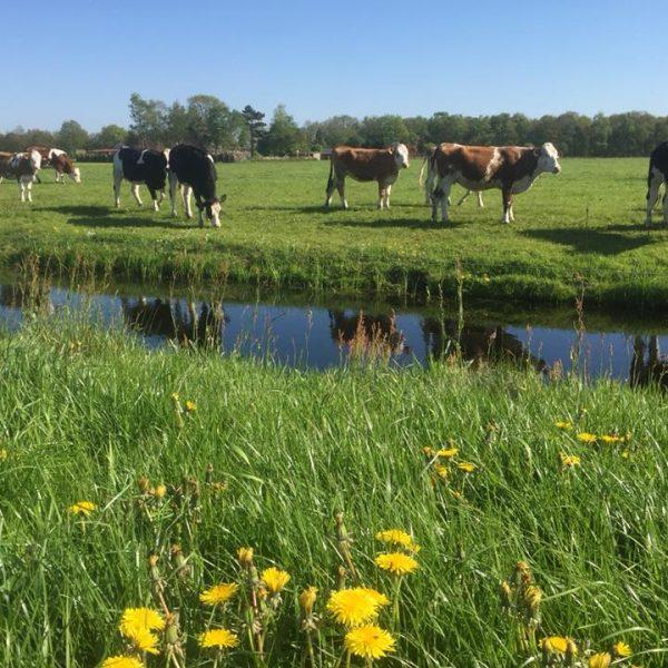 milieu - agrarisch